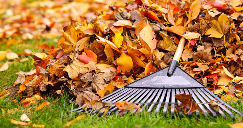 leaf_clean_up
